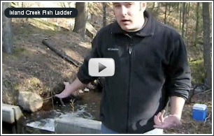 Click to open Island Creek Fish Ladder Video